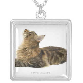 Close-up of a cat 3 silver plated necklace
