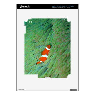 Close up of a clown anemone fish, Okinawa, Japan Decal For iPad 3