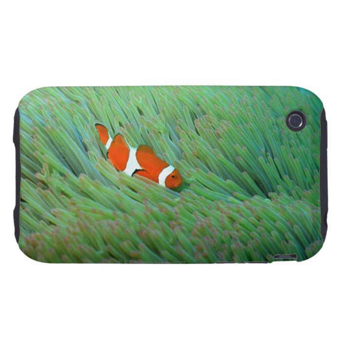 Close up of a clown anemone fish, Okinawa, Japan iPhone 3 Tough Case