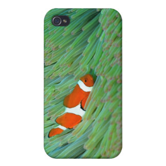 Close up of a clown anemone fish, Okinawa, Japan iPhone 4 Cases