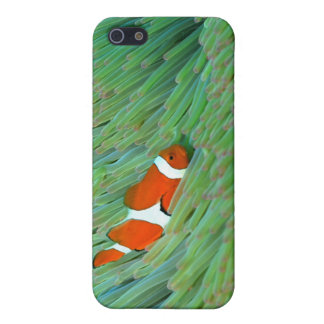 Close up of a clown anemone fish, Okinawa, Japan iPhone SE/5/5s Case