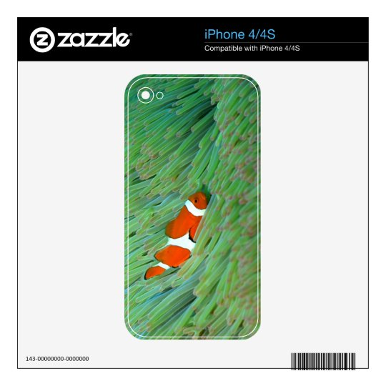 Close up of a clown anemone fish, Okinawa, Japan Skin For The iPhone 4
