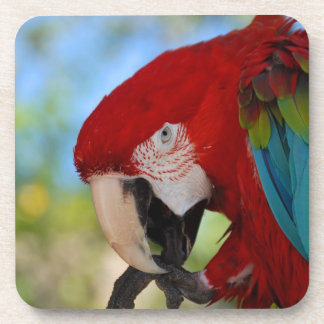 Close up of a Colorful Macaw Coaster