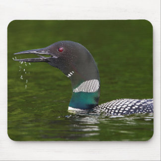 Close Up Of A Common Loon Mouse Pad