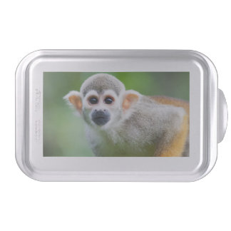 Close-up of a Common Squirrel Monkey Cake Pan