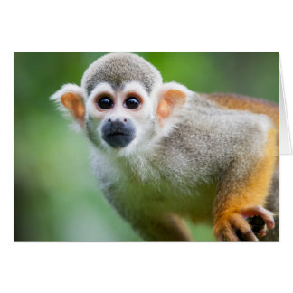 Close-up of a Common Squirrel Monkey Greeting Card
