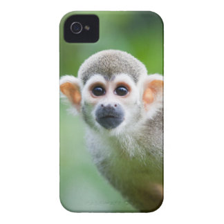 Close-up of a Common Squirrel Monkey iPhone 4 Case-Mate Cases
