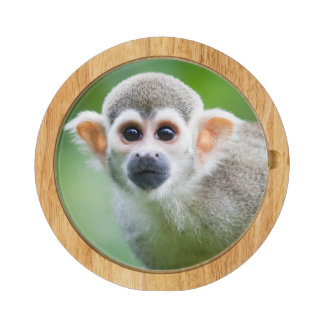 Close-up of a Common Squirrel Monkey Cheese Board