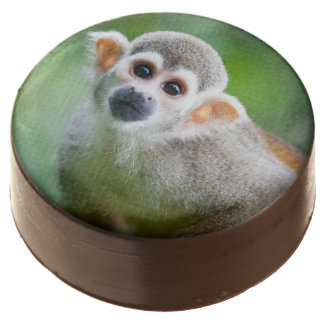 Close-up of a Common Squirrel Monkey Chocolate Dipped Oreo