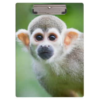 Close-up of a Common Squirrel Monkey Clipboard