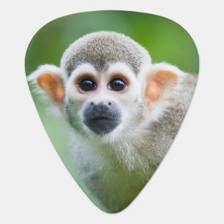 Close-up of a Common Squirrel Monkey Guitar Pick