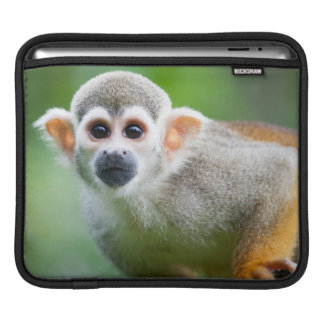 Close-up of a Common Squirrel Monkey iPad Sleeve