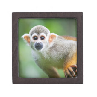 Close-up of a Common Squirrel Monkey Jewelry Box
