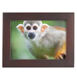 Close-up of a Common Squirrel Monkey Keepsake Box