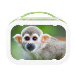 Close-up of a Common Squirrel Monkey Lunch Box