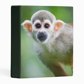 Close-up of a Common Squirrel Monkey Mini Binder