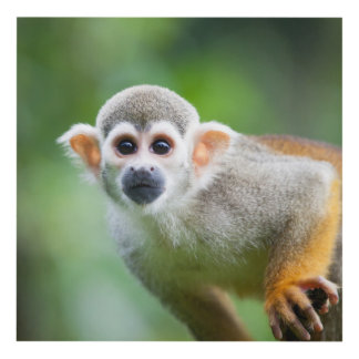 Close-up of a Common Squirrel Monkey Panel Wall Art
