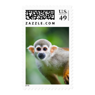 Close-up of a Common Squirrel Monkey Postage Stamps