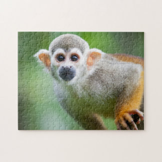 Close-up of a Common Squirrel Monkey Jigsaw Puzzles