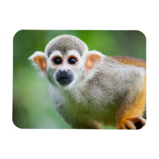 Close-up of a Common Squirrel Monkey Rectangular Photo Magnet