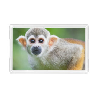 Close-up of a Common Squirrel Monkey Serving Tray