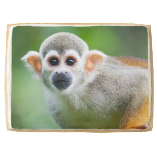 Close-up of a Common Squirrel Monkey Shortbread Cookie