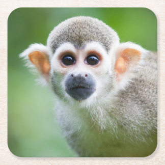 Close-up of a Common Squirrel Monkey Square Paper Coaster