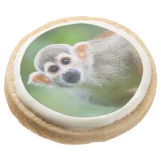 Close-up of a Common Squirrel Monkey Sugar Cookie