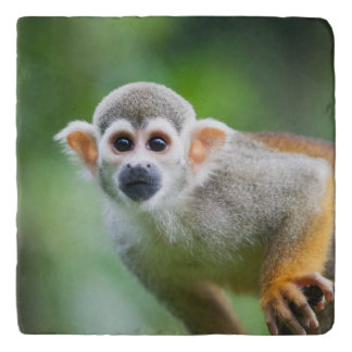 Close-up of a Common Squirrel Monkey Trivet