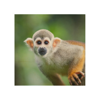 Close-up of a Common Squirrel Monkey Wood Print