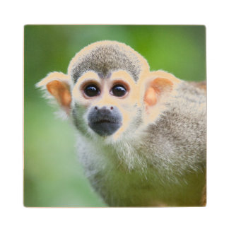 Close-up of a Common Squirrel Monkey Wooden Coaster