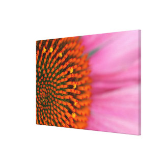 Close-up of a Cone Flower in the summertime, Stretched Canvas Prints