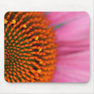 Close-up of a Cone Flower in the summertime, Mouse Pad