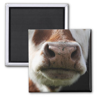 close up of a cow 2 inch square magnet
