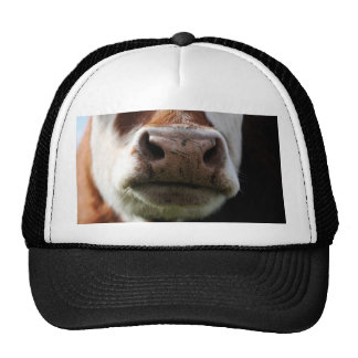 close up of a cow trucker hat