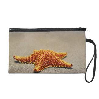 Close-up of a Cushion Starfish Wristlet Purses