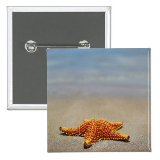 Close-up of a Cushion Starfish Button