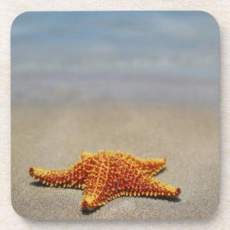 Close-up of a Cushion Starfish Drink Coaster