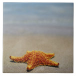 Close-up of a Cushion Starfish Large Square Tile