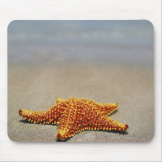 Close-up of a Cushion Starfish Mouse Pad