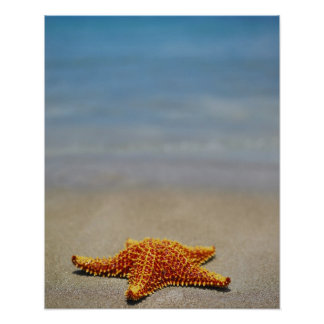 Close-up of a Cushion Starfish Poster