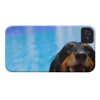 Close-up of a Dachshund dog panting Case-Mate iPhone 4 Case