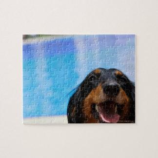 Close-up of a Dachshund dog panting Jigsaw Puzzle