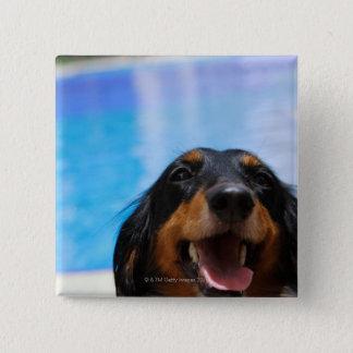 Close-up of a Dachshund dog panting Pinback Button