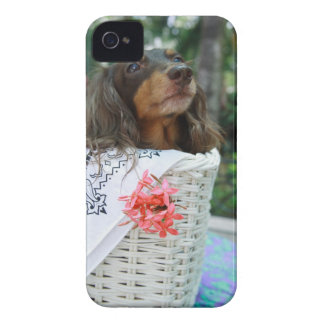 Close-up of a Dachshund dog sitting in a basket Case-Mate iPhone 4 Case