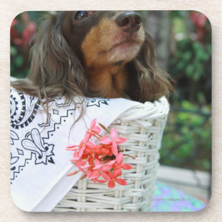 Close-up of a Dachshund dog sitting in a basket Coaster