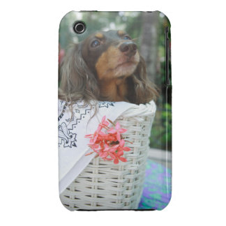Close-up of a Dachshund dog sitting in a basket iPhone 3 Cover