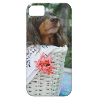 Close-up of a Dachshund dog sitting in a basket iPhone SE/5/5s Case