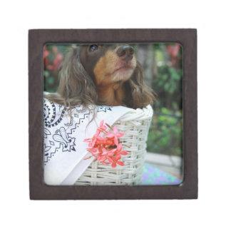 Close-up of a Dachshund dog sitting in a basket Keepsake Box