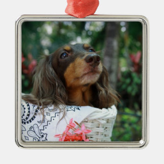 Close-up of a Dachshund dog sitting in a basket Metal Ornament